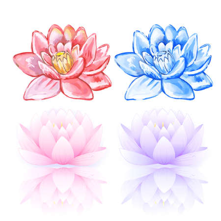 macro flowers: Vector illustration of pink and blue lotus isolated on white background