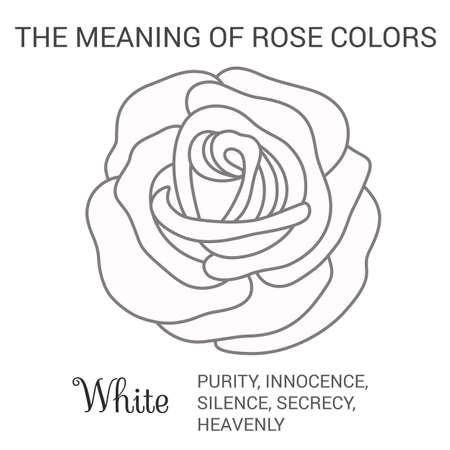 on white: White rose infographics, vector illustration isolated on white background