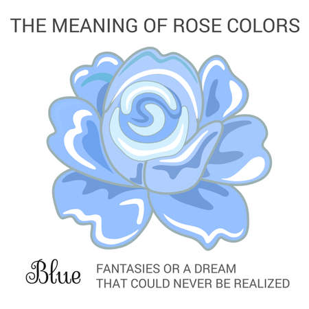 Attar: Blue rose infographics, vector illustration isolated on white background