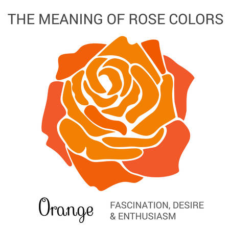 desire: Orange rose infographics, vector illustration isolated on white background