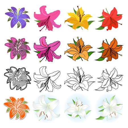 white lilly: Lilies set black outline & colored, different styles drawn; isolated on white background Illustration