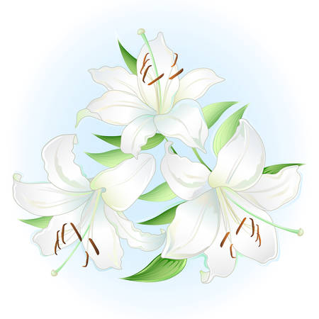 solitary: White lilies bouquet; isolated on white background