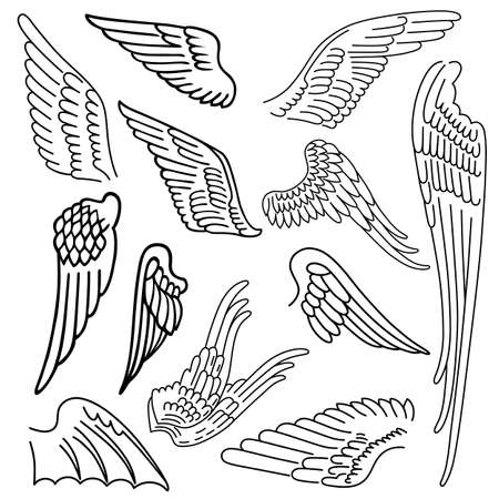 wings vector: Birds & wings set linear silhouette isolated on background, vector illustration