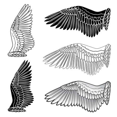 piuma bianca: ali dei piccioni e colomba silhouette lineare isolato su sfondo bianco, illustrazione vettoriale