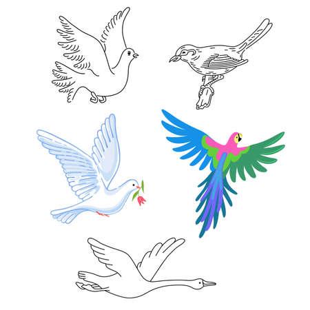 Las aves silueta lineal aislado en el fondo, ilustración vectorial