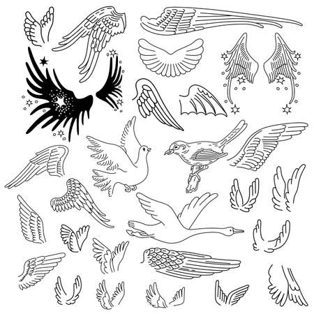 Birds & wings set linear silhouette isolated on background, vector illustration