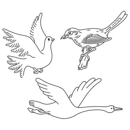 oiseau dessin: Birds & ailes mis silhouette linéaire isolé sur fond, illustration vectorielle Illustration