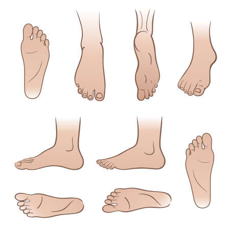 tarsus: Closeup outlined colored man feet isolated on white background, vector illustration. You can use this image for fashion design and etc. Illustration