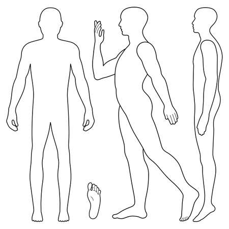 proportions of man: Fashion body full length bald template figure silhouette (front, side stand and going view), vector illustration isolated on white background