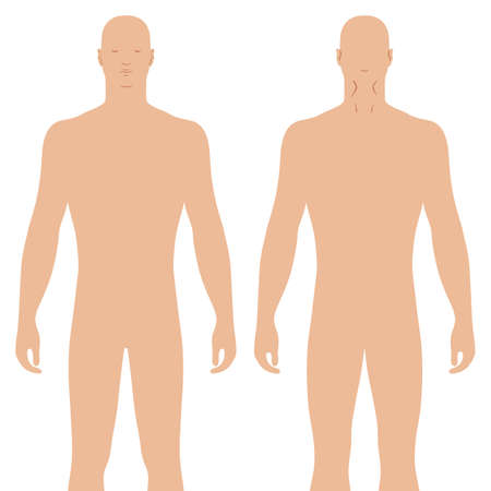 Fashion body full length bald template figure silhouette (front, back views), vector illustration isolated on white background Illustration
