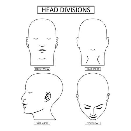 Man head divisions scheme template offront, back, top, side views, vector illustration isolated on white background
