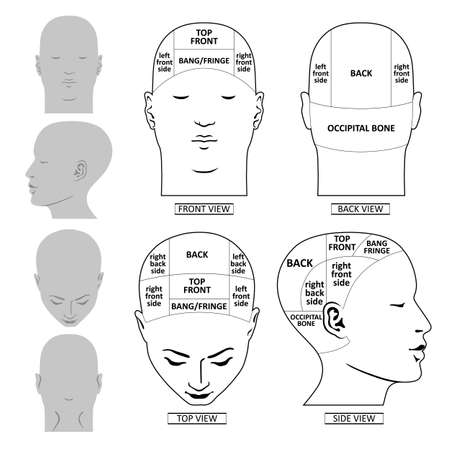 Man head divisions scheme template front, back, top, side views, vector illustration isolated on white background