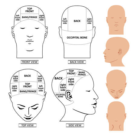 Man head divisions scheme template (front, back, top, side views), vector illustration isolated on white background 矢量图像