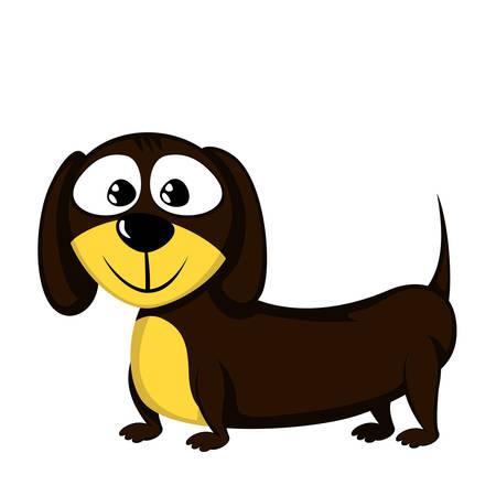 Lovely little dachshund
