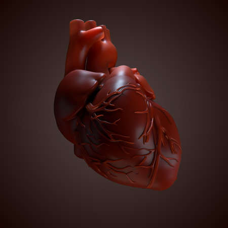 muscle cell: 3d rendered Human Heart. Anatomy of Human Heart.