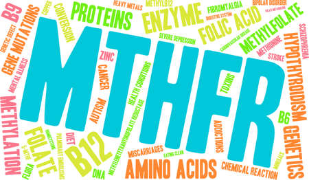 metabolism: MTHFR word cloud on a white background. Illustration