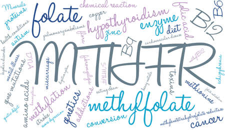 MTHFR word cloud on a white background.  イラスト・ベクター素材