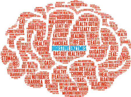 absorb: Digestive enzymes word cloud concept. Illustration