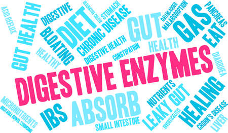 Digestive enzymes word cloud concept. Ilustrace