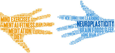 Neuroplasticity Brain word cloud on a white background.  Illustration