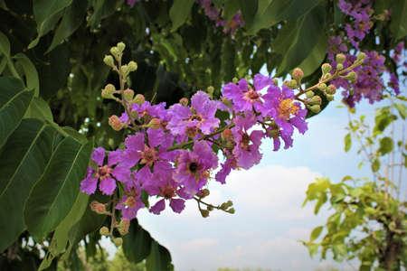 Purple flowers Wayside Stock Photo