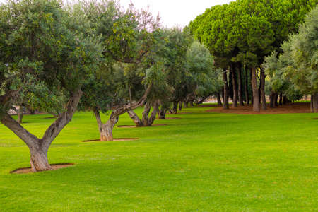 Landscape of a garden area with trees such as olive trees and pine trees.