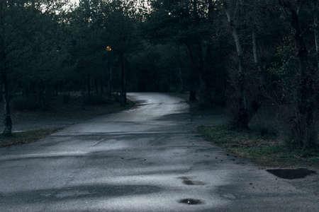 Asphalt road freshly wet from the rain, entering a dark and leafy forest. Фото со стока
