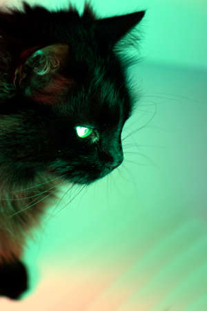 Close-up of a cat with green background.