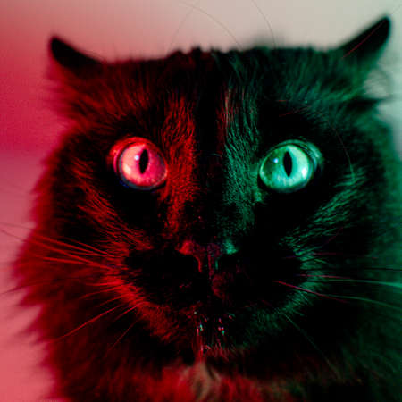 Close-up of a cat's face with green and red lights