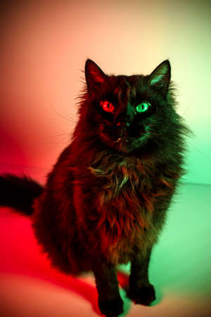 Portrait of a cat with green and red lights
