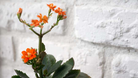 flowerpot orange flowers background brick wall trembling colors