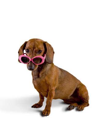 Dog wearing pink sunglasses  Imagens