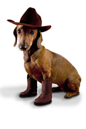 Dog wearing cowboy hat and boots photo