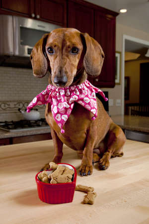 valentines dog: Dog with treats in heart shaped bowl sitting on kitchen table