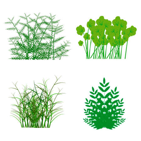 hedge trees: different types of grass to illustrate Illustration
