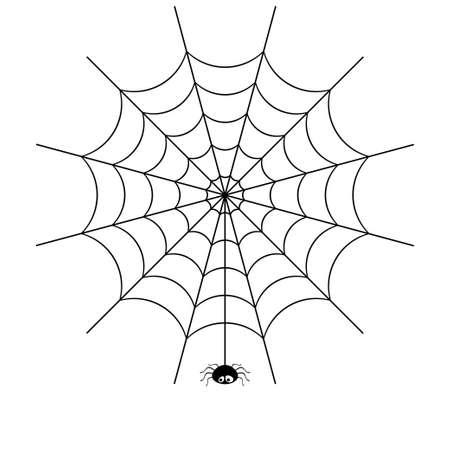 spider web: spider web