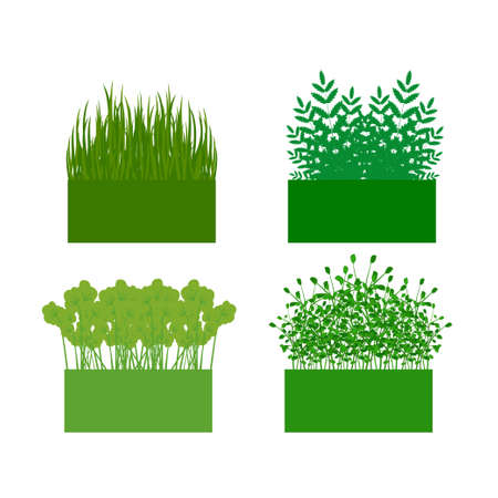 hedge: vector illustration. The background with the ability to edit