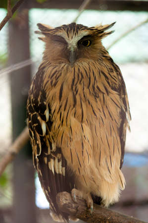 Owls are birds from the order Strigiformes, which includes about 200 species of mostly solitary and nocturnal birds of prey typified by an upright stance, a large, broad head, binocular vision, binaural hearing, sharp talons, and feathers adapted for silent flight