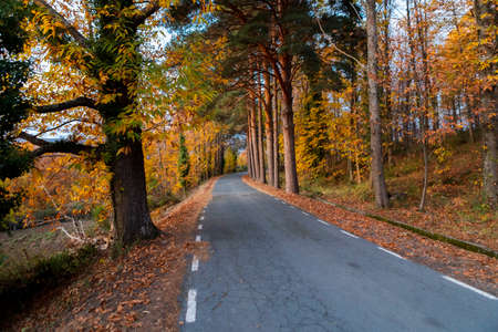 Road surrounded by many trees in autumn with fallen leaves at the edge of the road