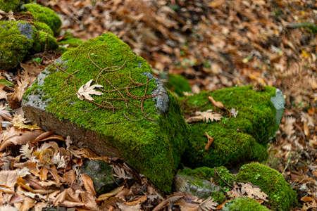 Stones with a lot of green moss in the Chestnut del Temblar in the province of Cáceres near the town Segura de Toro Banco de Imagens