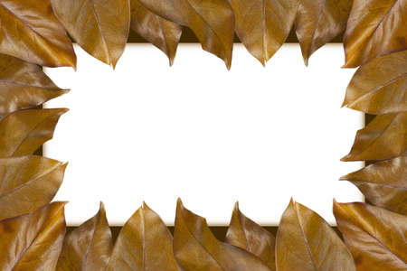 Frame made of autumn leaves on a white background. photo