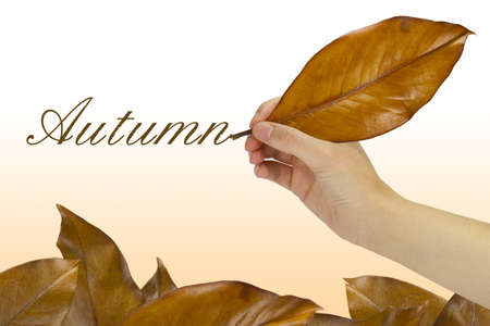 Hand writing the word autumn with a dry leaf over several fallen leaves. photo