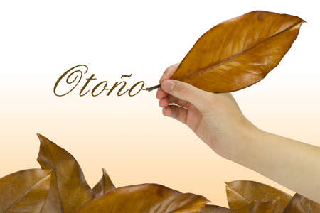 Hand writing the word autumn with a dry leaf over several fallen leaves. Stock Photo