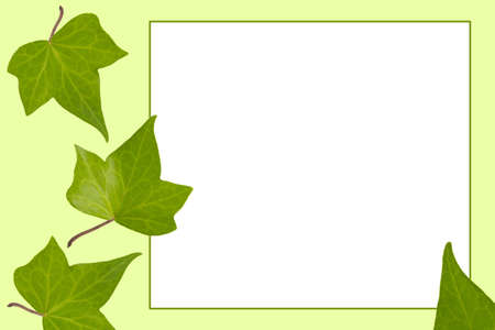 Green leaf frame on a white background  Stock Photo