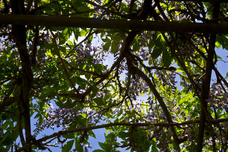 Picture of several purple flowers and green leaves against backlight. Stock Photo