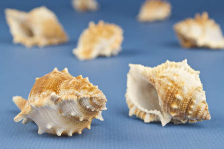 Photo of a group of sea snails on a blue background.