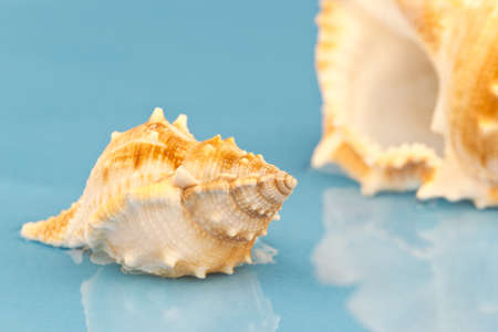 Picture of a little sea snail on a blue background. Stock Photo