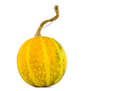 Picture of a small pumpkin on a white background.