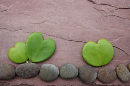 hoya heart tree on the rock Stock Photo - 17306352