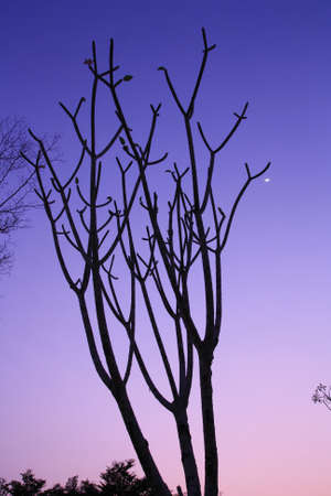 branch of tree in sunset time